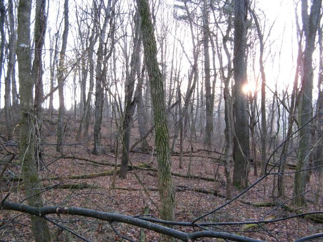 Downed Trees 3.jpg